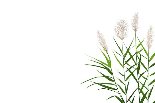 Vectorhandtekeningsschets met riet