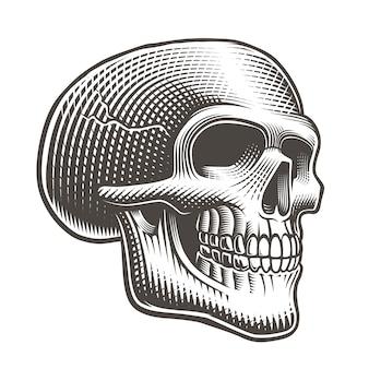 Vectorillustratie van een schedelprofiel in tattostijl op een witte achtergrond