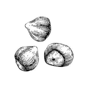 Vectorillustratie van handschetched hazelnoot vintage noten schetsen