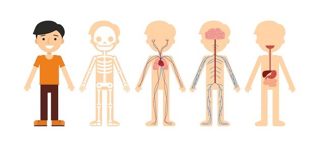 Vectorillustratie van lichaamsanatomie.