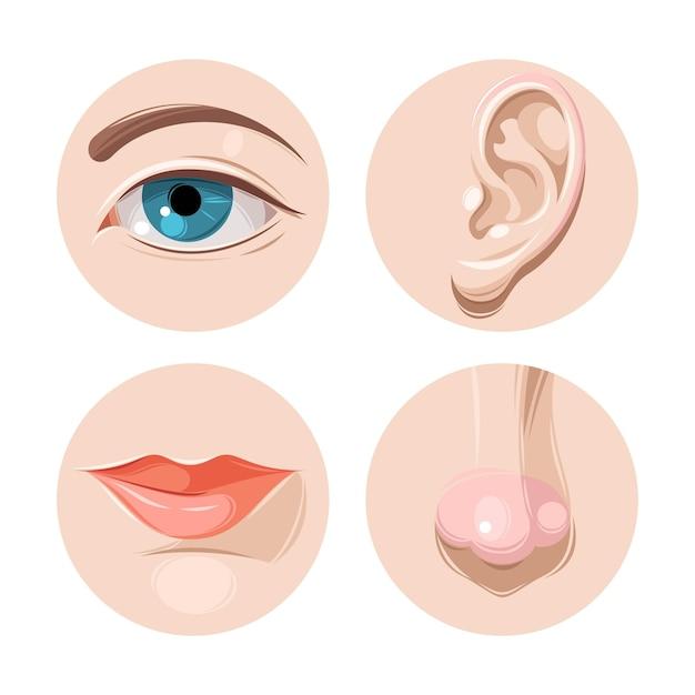 Vectorillustratie van oog oor mond en nos