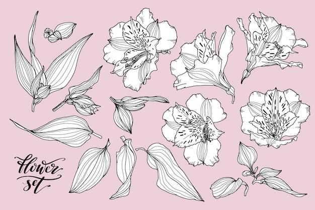 Vectorinzameling van hand getrokken bloemelementen.