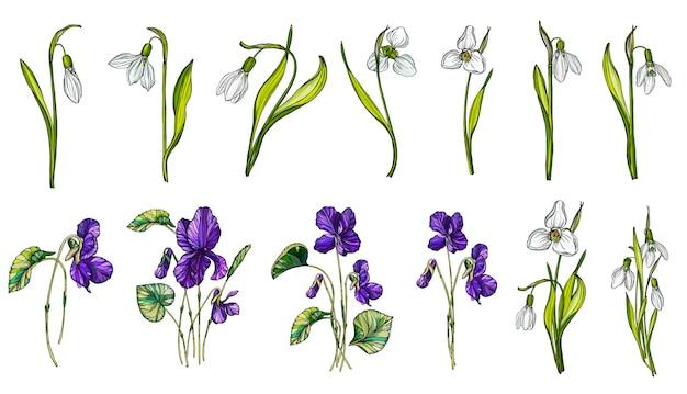 Vectorreeks kleuren van sneeuwklokje en viooltjes