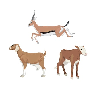 Vee-antilope kalf geit
