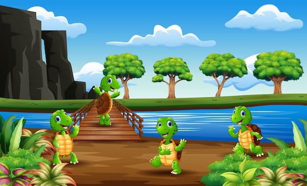 Veel schildpadden over de houten brug
