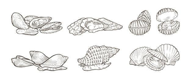 Veel soorten schelpdieren handgetekende illustraties