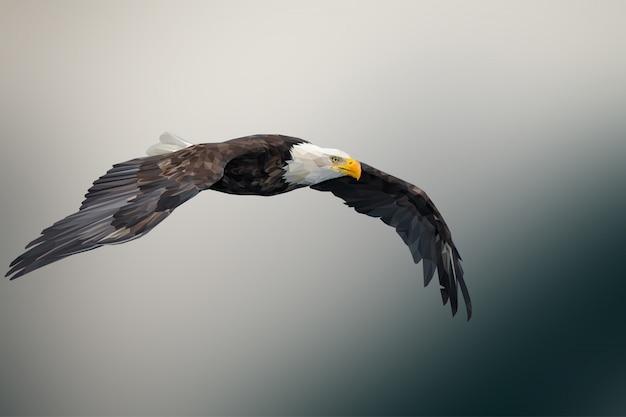 Veelhoekige geometrische eagle dierlijke achtergrond