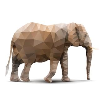 Veelhoekige olifant
