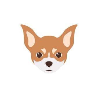 Veelkleurig hoofd van puppy chihuahua