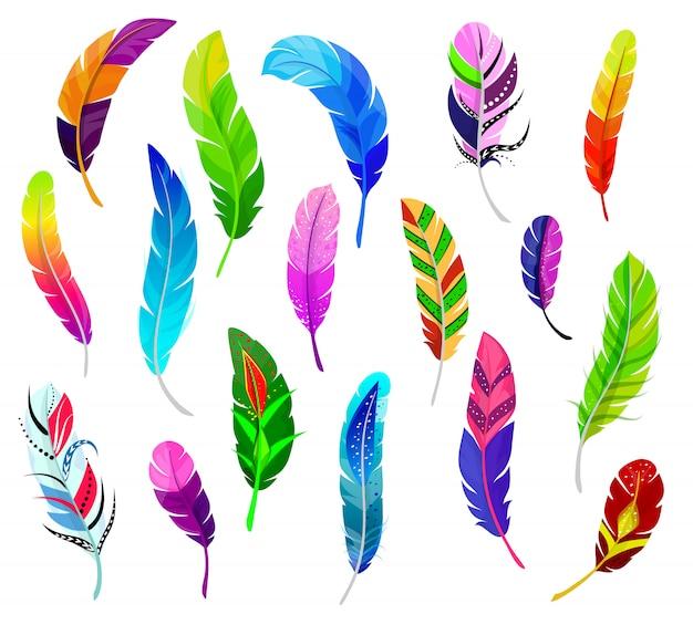 Veer vector pluizige bevedering quil en kleurrijke gevederde vogels pluim set van kleur veer-pen decor