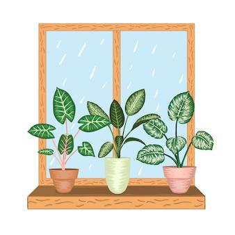 Venster met tropische kamerplanten in potten. uitzicht op regenachtig weer.