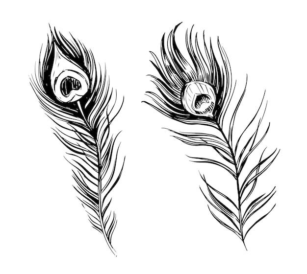 Veren illustratie. hand getrokken ink schets.