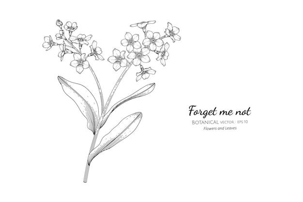 Vergeet me niet bloem en blad hand getekende botanische illustratie met lijntekeningen.