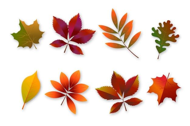 Verloop herfstbladeren collectie