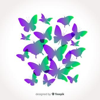 Verloop vlinder collectie