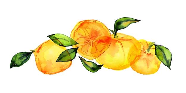 Vers citrusvruchtenboeket door getraceerde waterverf. leuk decor voor huis- en cafétextiel, voor verpakkingsdecor en menu
