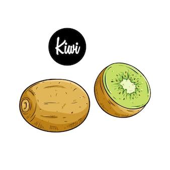 Vers kiwifruit met gekleurde getrokken hand of schetsstijl