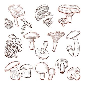 Vers voedsel van paddestoelen. natuur vector hand getrokken illustratie.