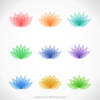 Verscheidenheid van kleurrijke lotusbloemen