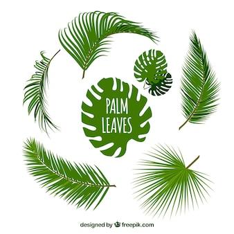 Verscheidenheid van palmbladeren