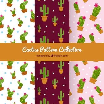 Verschillende cactuspatronen in vlakke vormgeving