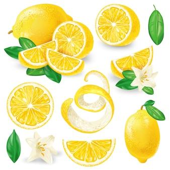 Verschillende citroenen met bladeren en bloemen vector