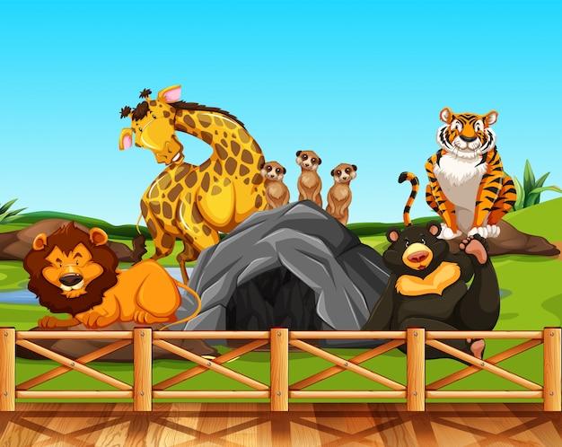 Verschillende dieren in een dierentuin
