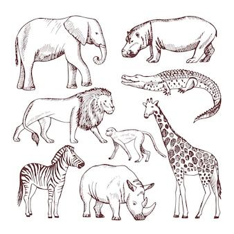 Verschillende dieren van savana en afrika Premium Vector