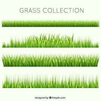 Verschillende gras collectie