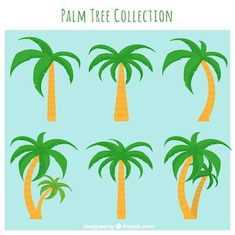 Verschillende palmbomen