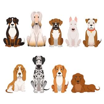 Verschillende rassen van honden