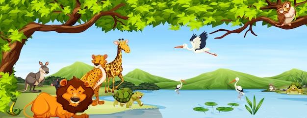 Verschillende scènes voor wilde dieren