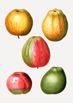 Verschillende soorten appel
