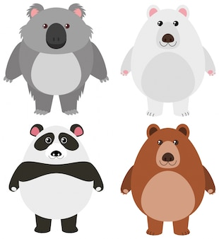 Verschillende soorten beren op witte achtergrond