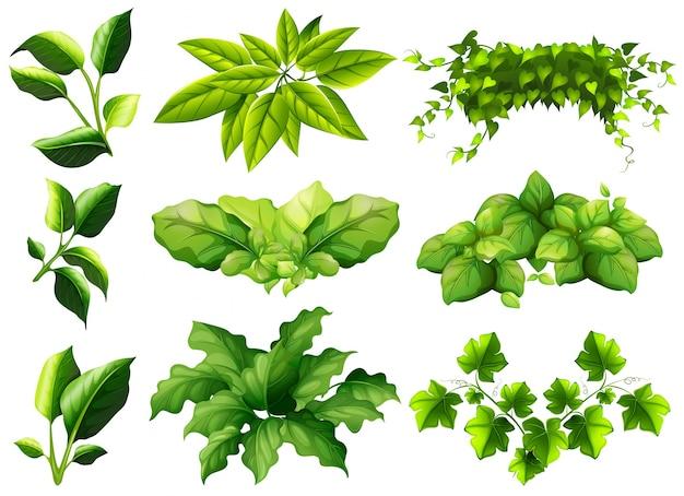 Verschillende soorten bladeren illustratie
