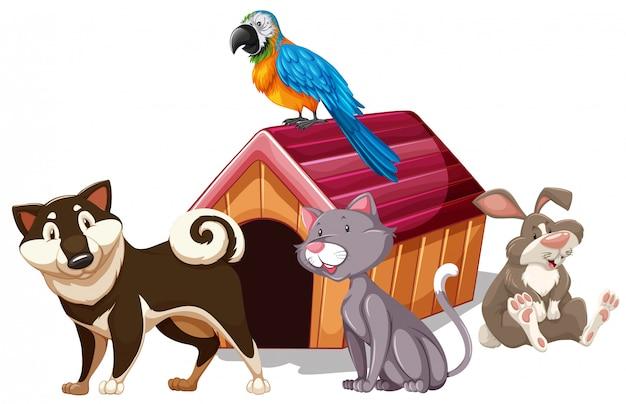 Verschillende soorten huisdieren rond het huis
