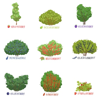 Verschillende soorten tuinbesheesters met namen, fruitbomen en bessenstruiken illustraties op een witte achtergrond