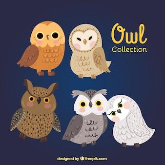Verschillende soorten uilen