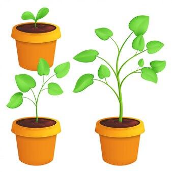 Verschillende stadia van het kweken van jonge plant. botanische set illustratie van een groene spruit met bladeren in pot geïsoleerd