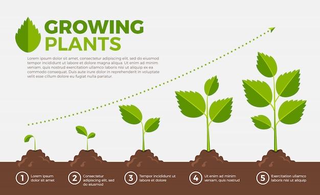 Verschillende stappen van het kweken van planten. vectorillustratie in cartoon stijl.
