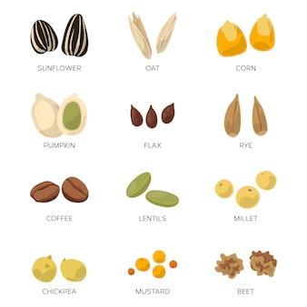Verschillende zaden die op wit worden geïsoleerd. zonnebloem, koffie, pompoen en andere vector icon set