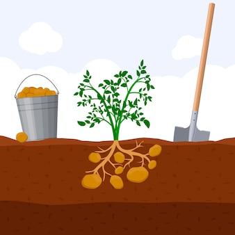 Verse biologische moestuinplant groeit ondergronds