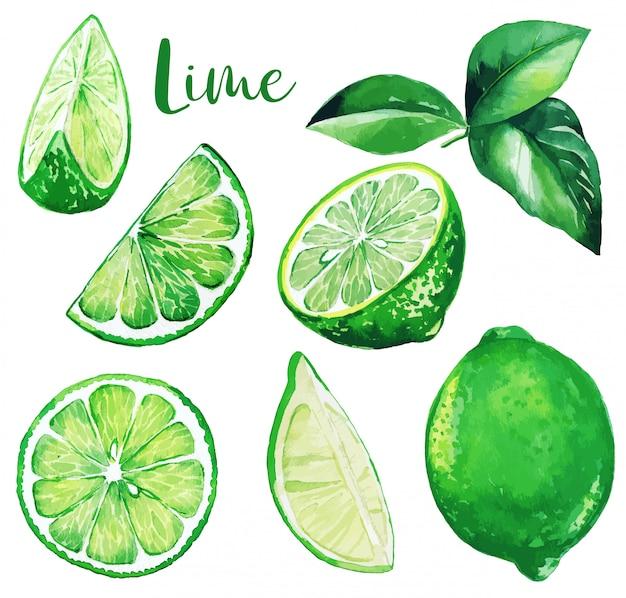 Verse groene limoenen en bladeren, aquarel fruit