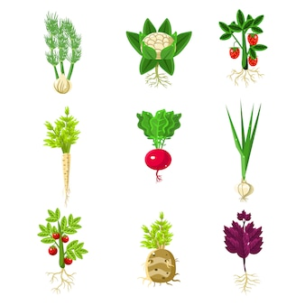 Verse groenten met wortels primitieve tekeningen instellen