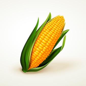 Verse heerlijke maïs, kan worden gebruikt als elementen, geïsoleerde witte achtergrond