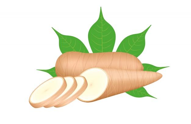 Verse maniok en blad dat op witte achtergrond, de ruwe plak van de maniokbesnoeiing voor de industrie van de tapiocabloem wordt geïsoleerd