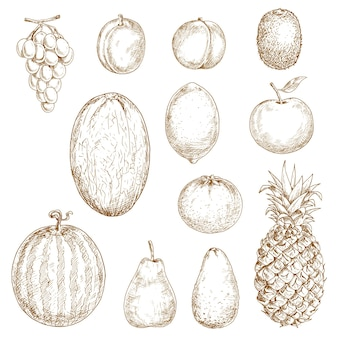 Verse peer en citroen, sinaasappel en appel, pruim en druif, perzik en ananas