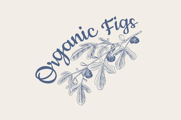 Verse vijgen badge. fruit gebladerte label of logo. detox kruiden. loof, plant en tak.