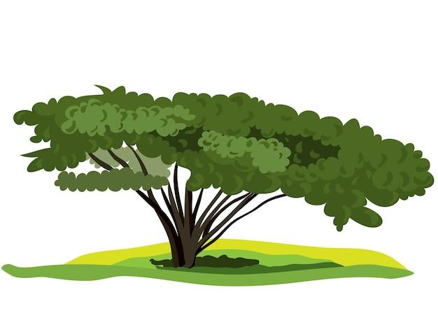 Verspreidende boom met weelderig groen gebladerte is geïsoleerd op een witte achtergrond