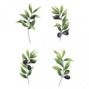 Verzameling aquarellen in olijfbladstijl